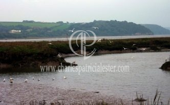 Laugharne-evening gulls over estuary